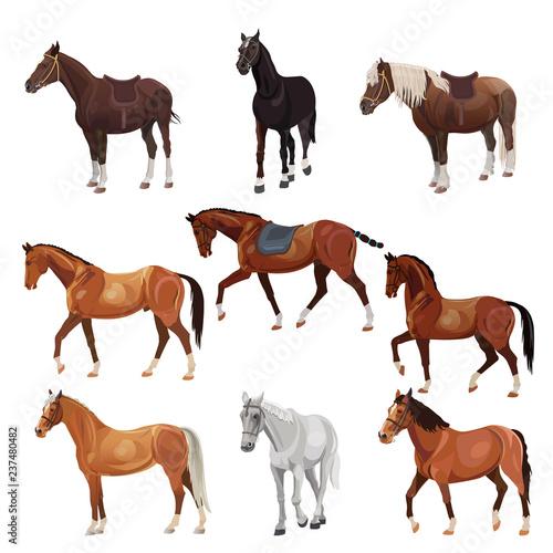 Horses in various poses Wallpaper Mural