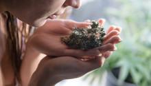 .girl Holding Fresh Marijuana ...