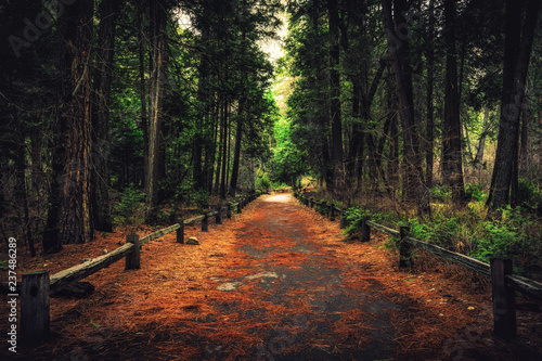 Path Through the Forest, Yosemite National Park, California
