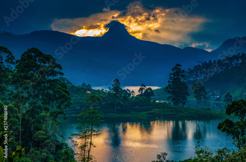 Fotografie, Obraz panorama of the tea plantations at sunset - Sri Pada peak in the background