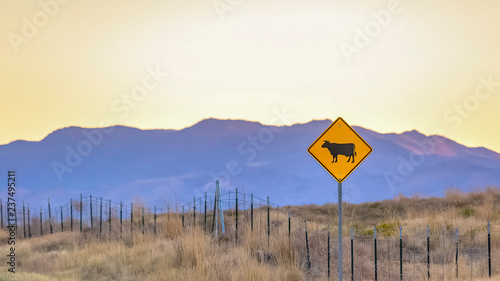 Vászonkép Cattle crossing road sign in Highway 68 Utah