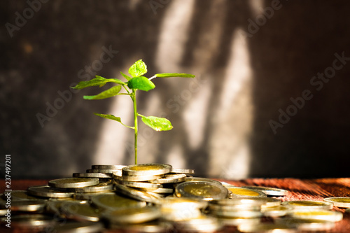 Garden Poster Roe Plant Growing From the Coins. Concept Picture of Saving or Business Investment