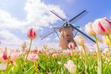 Fototapeta Tulips - 日本の春 千葉県 佐倉のチューリップ畑