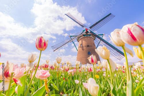 Foto op Plexiglas Tulp 日本の春 千葉県 佐倉のチューリップ畑