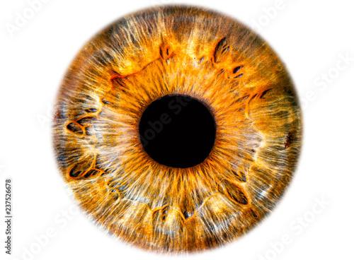 Iris ,das menschliche Auge, freigestellt Fototapete