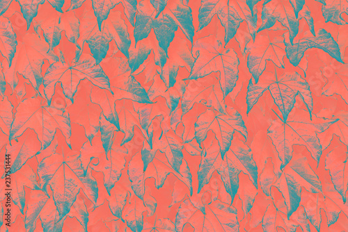 Fototapeta Abstract natural leaves background Living Coral creative and moody color of the picture