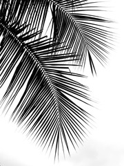 beautiful palms leaf on whi...