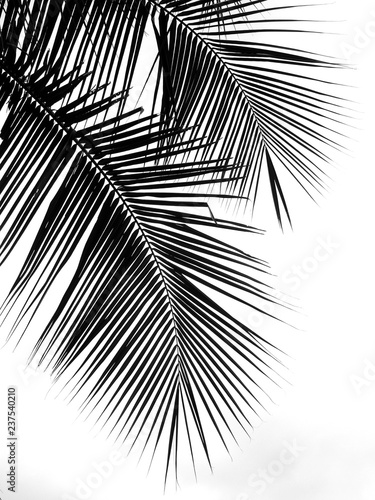 beautiful palms leaf on white background Tablou Canvas