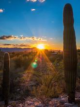 Beautiful Sunset With Cactus In Arizona