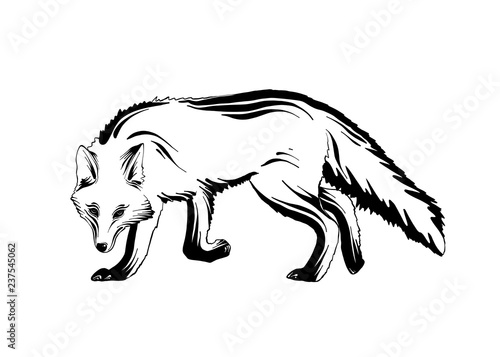 Vector engraved style illustration for posters, decoration and print. Hand drawn sketch of forest fox in black isolated on white background. Detailed vintage etching style drawing.