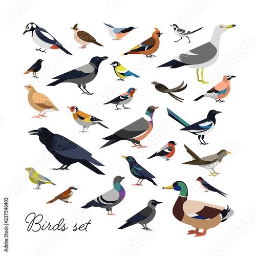 Bundle of city and wild forest birds drawn in modern geometric flat style, side view. Set of colorful cartoon avians or birdies isolated on white background. Trendy ornithological vector illustration.