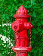 Red Fire Hydrant Against Vivid Green Leaves