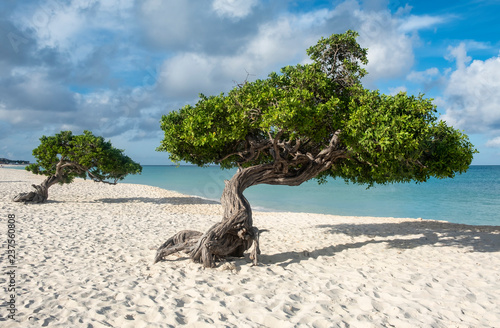 Платно Divi Divi Tree of Eagle Beach Aruba