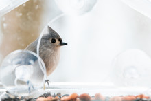 Closeup Of One Cute Tufted Titmouse Perched On Plastic Window Bird Feeder Perch On Suction Cups With Sunflower Seeds, Peanut Nut, Looking Side, Eye During Snow, Snowing, Virginia