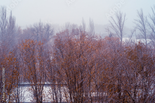 Fotobehang Lavendel Winter landscape - snow storm, snow covered trees and black birds