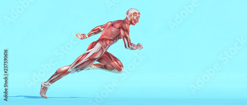 Male muscular system running. Tablou Canvas