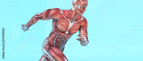 Leinwand Poster Male muscular system running.