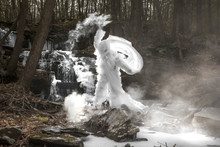 White Creature In The Woods