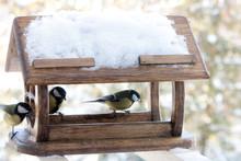 Cute Small Birds Parus Major T...