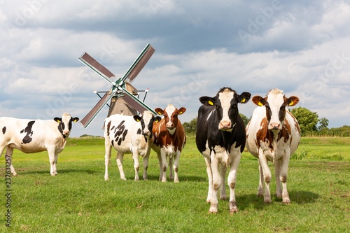 Cows in front of the Akkersloot windmill in Oud Ade in the Netherlands Wallpaper Mural
