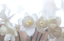 Close-up Of Bouquet Of White D...