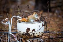 Cute Little Red Squirrel Sitti...