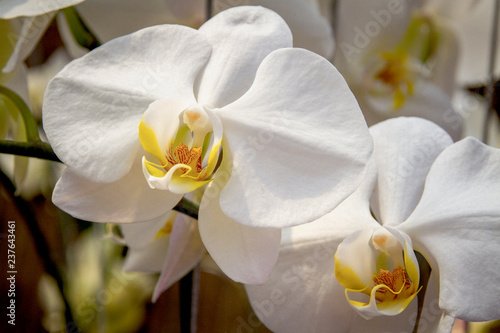 Recess Fitting Spa Orchid flower close-up picture