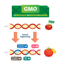 GMO Vector Illustration. Organic And Modified Agricultural Plants Scheme.