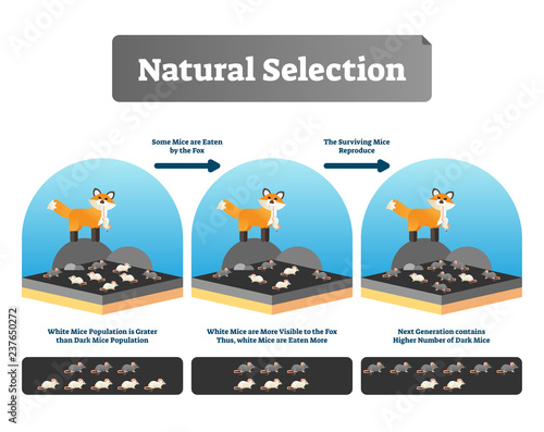 Leinwand Poster Natural selection vector illustration