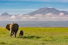 Elephants Walking In Front Of ...