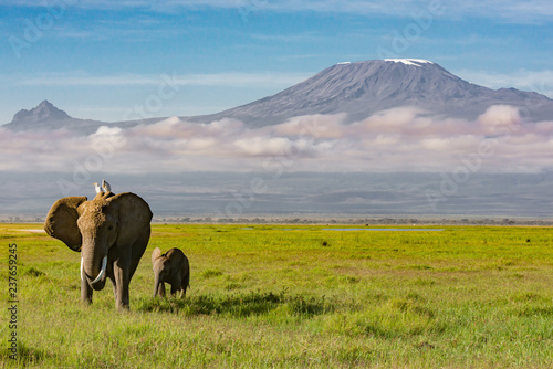 Elephants Walking in Front of Mount Kilimanjaro
