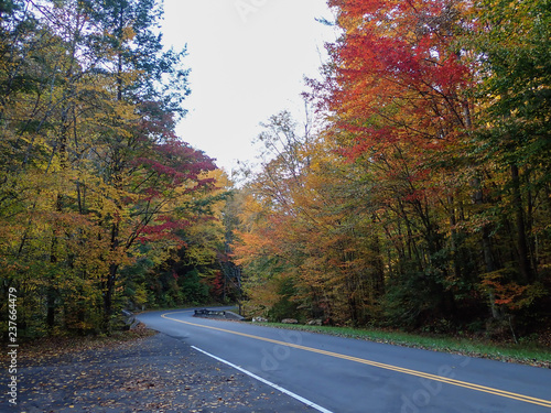 Foto  Curved two lane country road thru the  forest in fall colors