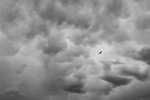 Bird Flying In Gloomy Sky