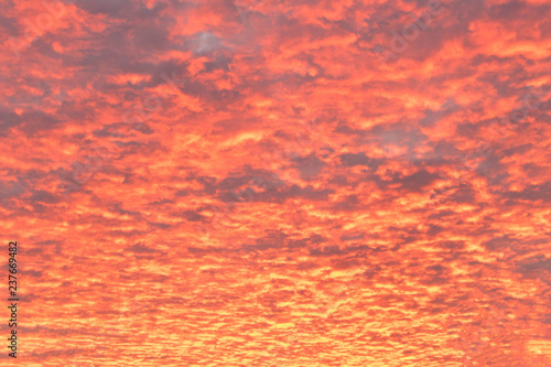 Poster Corail Beautiful crimson sunset . Purple cloudy sky