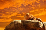 Lion at sunset background