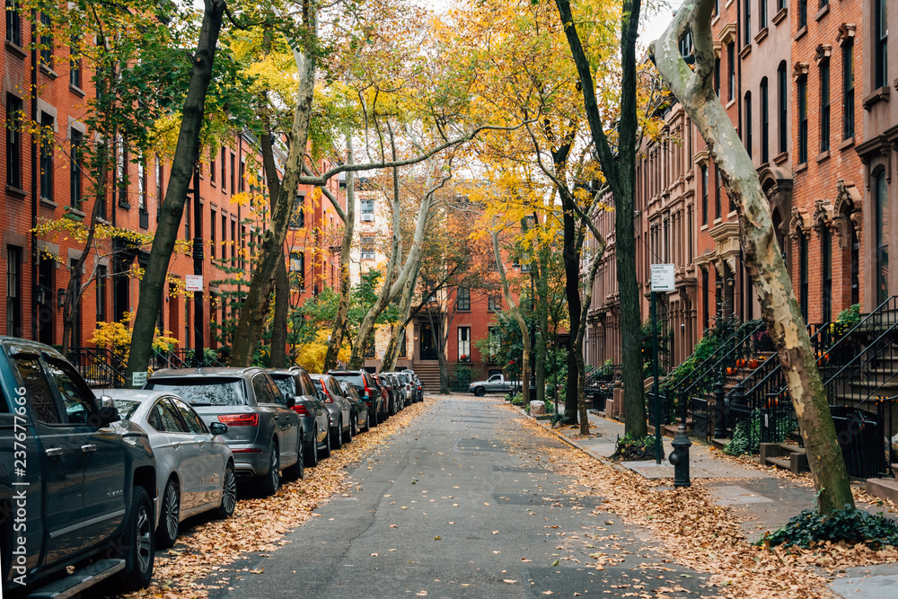 Fototapety, obrazy: Brownstones and fall color in Brooklyn Heights, New York City