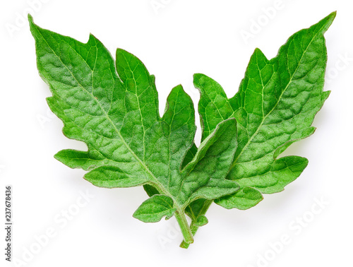 Tomato leaves isolated