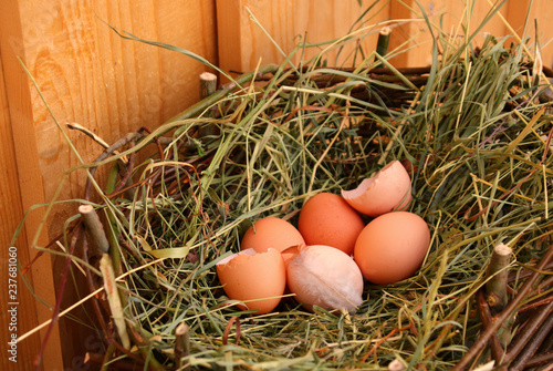 Fotografia, Obraz  nest mit hühnereiern   bio