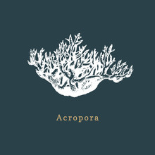 Acropora Coral Vector Illustration. Drawing Of Sea Polyp On Dark Background.