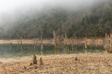 Sülüklü Göl (Leech Lake) With Fog And Decaying Trees In The Bolu Mountains Of Turkey
