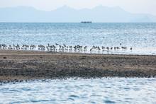 Birds In The Sand