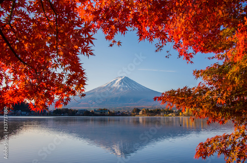 Mount Fuji, Autumn in Mt. Fuji, Japan - Lake Kawaguchiko , Colorful Autumn Season and Mountain Fuji with morning sunrise and red leaves at lake Kawaguchiko, Japan.