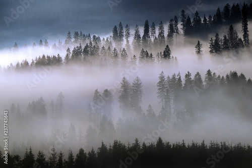 Canvas Prints Morning with fog Beskid Forest