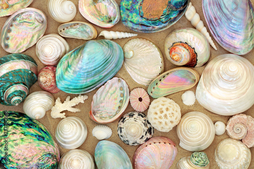 Large seashell selection on beach sand. Canvas Print