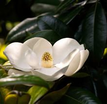 White Blooming Flower