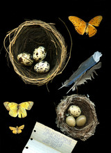 Spotted Eggs In Nests
