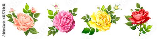 Lovely rose flower Wallpaper Mural