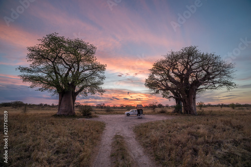 Foto op Canvas Baobab Remote campsite at Baines Baobab in Botswana
