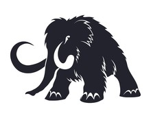 Black Silhouettes Of Mammoths On A White Background. Prehistoric Animals Of The Ice Age In Various Poses. Elements Of Nature And Evolutionary Development. Vector Illustration.