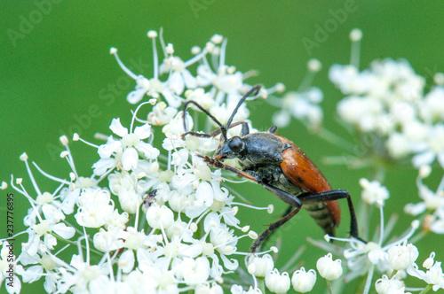 Fotografía  Insecto